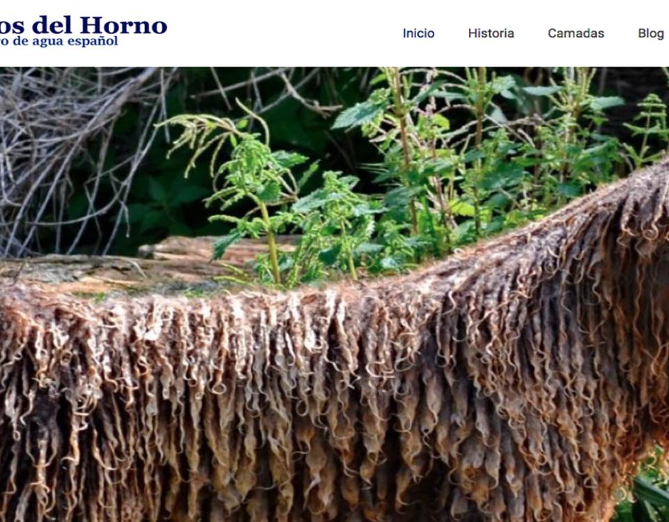 Spanish water dog diseño web Sevilla